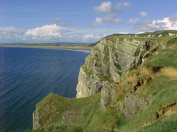 Cliffs-sheep-water in Wales.JPG