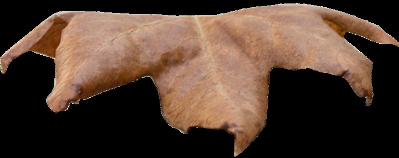 Leaf 29.png