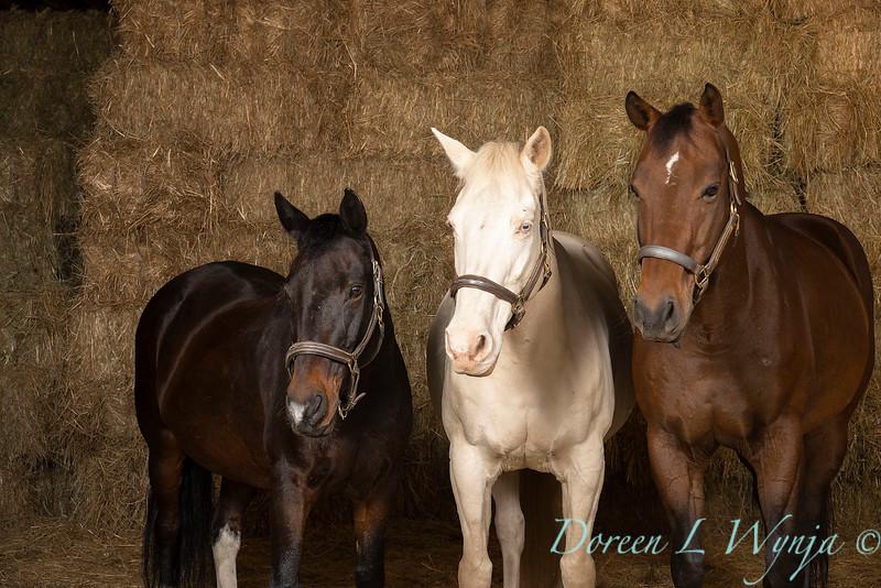 Horse family portrait_123.jpg