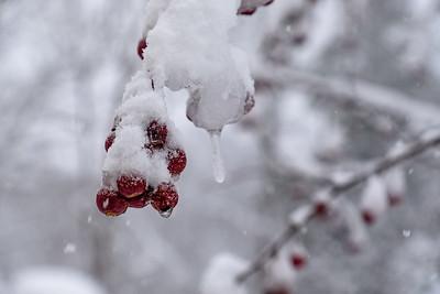 winter :: 2020