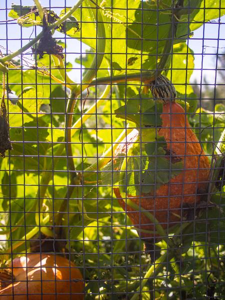 statlander farm 7.jpg