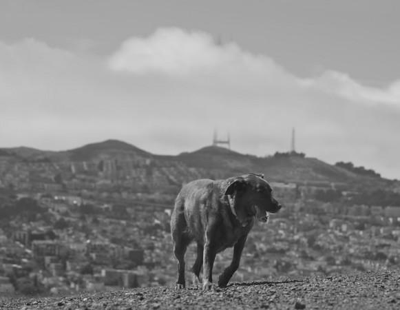 Bernal Heights Dog Park