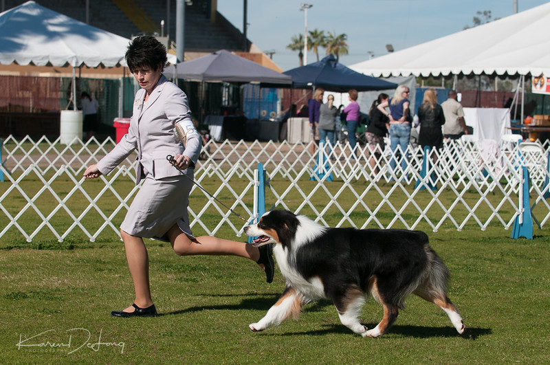 20170205_Australian Shepherds_Lost Dutchman Kennel Club-67.jpg