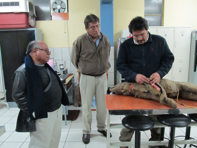 Here Dr Mauricio from Ricardo Palma University in Lima demonstrates Jerry to the two academics in charge of surgical training.