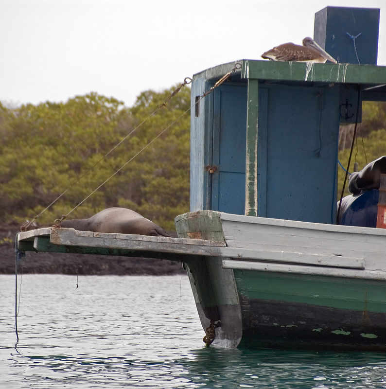 Sea lion and pelican resting on a boat