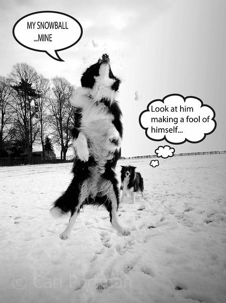 snowdog2.jpg