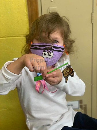 kindergarten: apples, caterpillars and butterflies