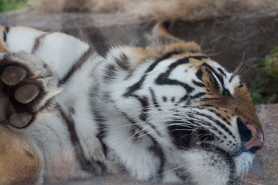 7.8.15 Milwaukee County Zoo with RSA