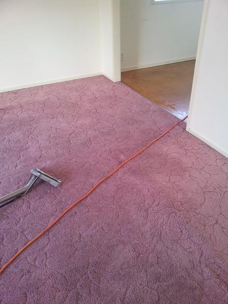 carpet after.jpg