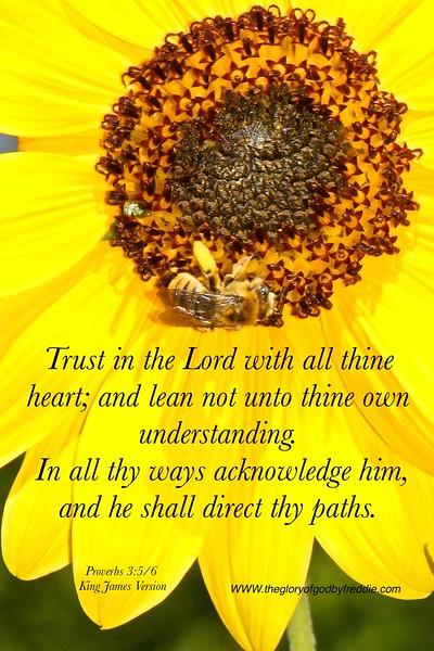 Proverbs 3-5:6 .jpg