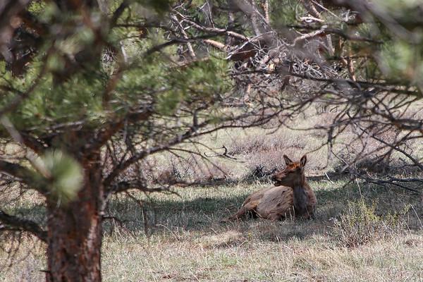 Rocky Mountain National Park 2017