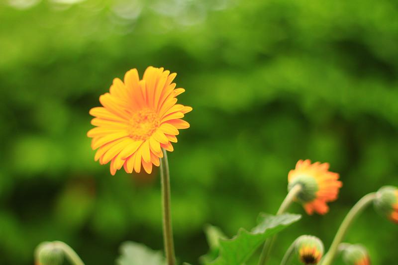 debbies flowers 2019-1316-2.jpg