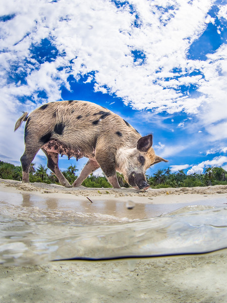 Staniel Caye - Pig Island-143.jpg