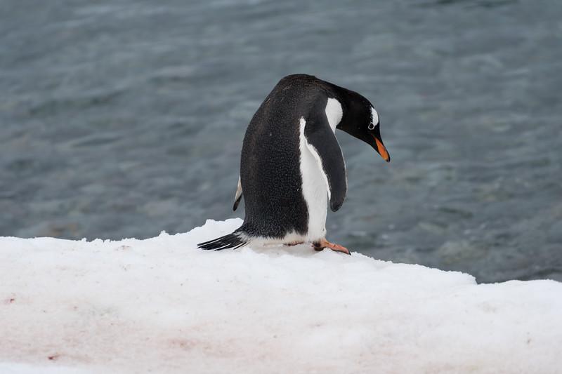 Antarctica-4899.jpg