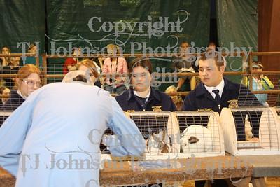 2011 KISD Livestock Show Market Rabbit
