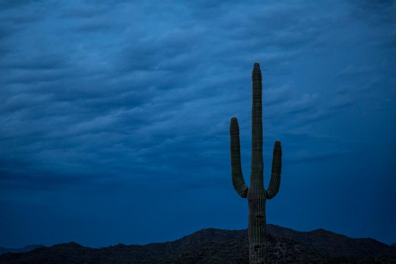 AZ_PH_Cactus-0314.jpg