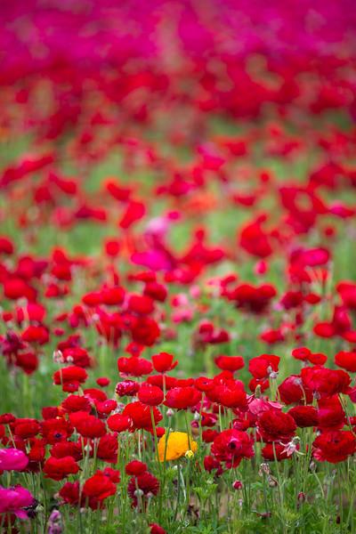 Spring Flowers B-389.jpg