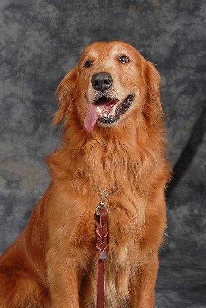 2007 LP Parks & Rec DOGGONE Dog Show