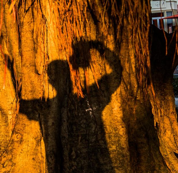 Banyan Tree 12