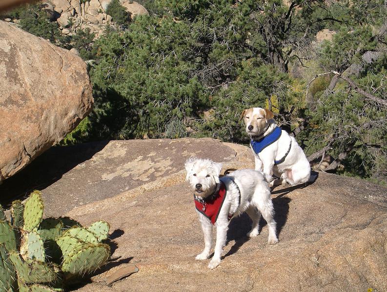 TRhikingdogs10_10.jpg