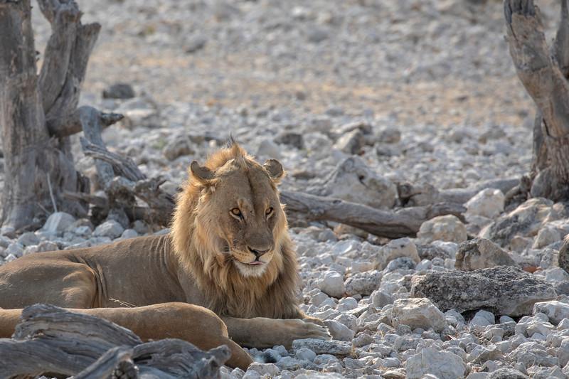 Namibia 69A8970.jpg