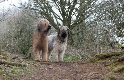 Basil and Marley at Shotover woods