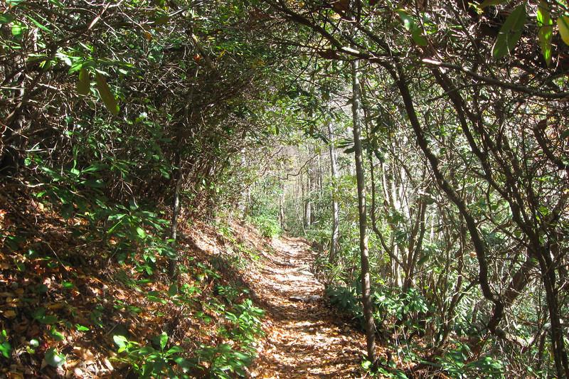 Spence Ridge Trail -- 2,300'