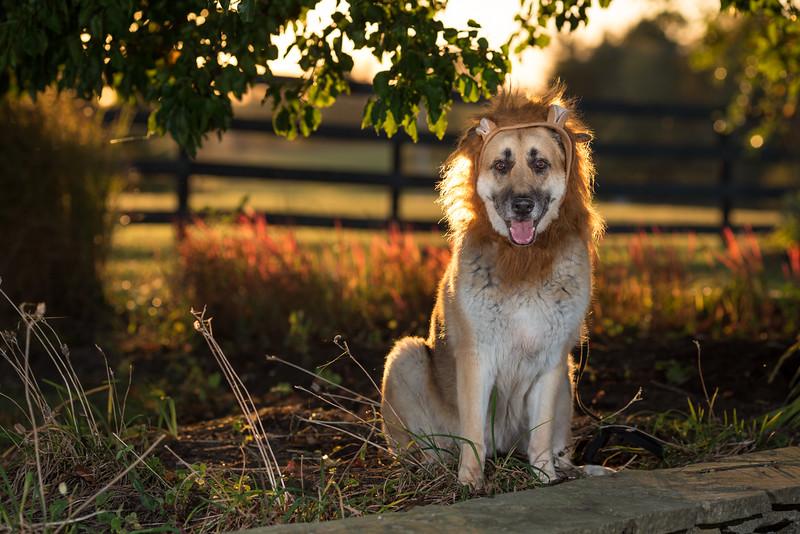 16_1024_buntingdogs-50.jpg