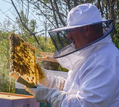 Maine Beekeeper