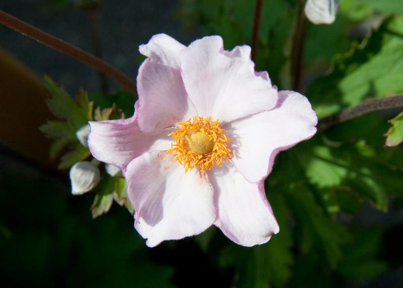 2009 09 06_White Flower Farm_0116_edited-1.jpg