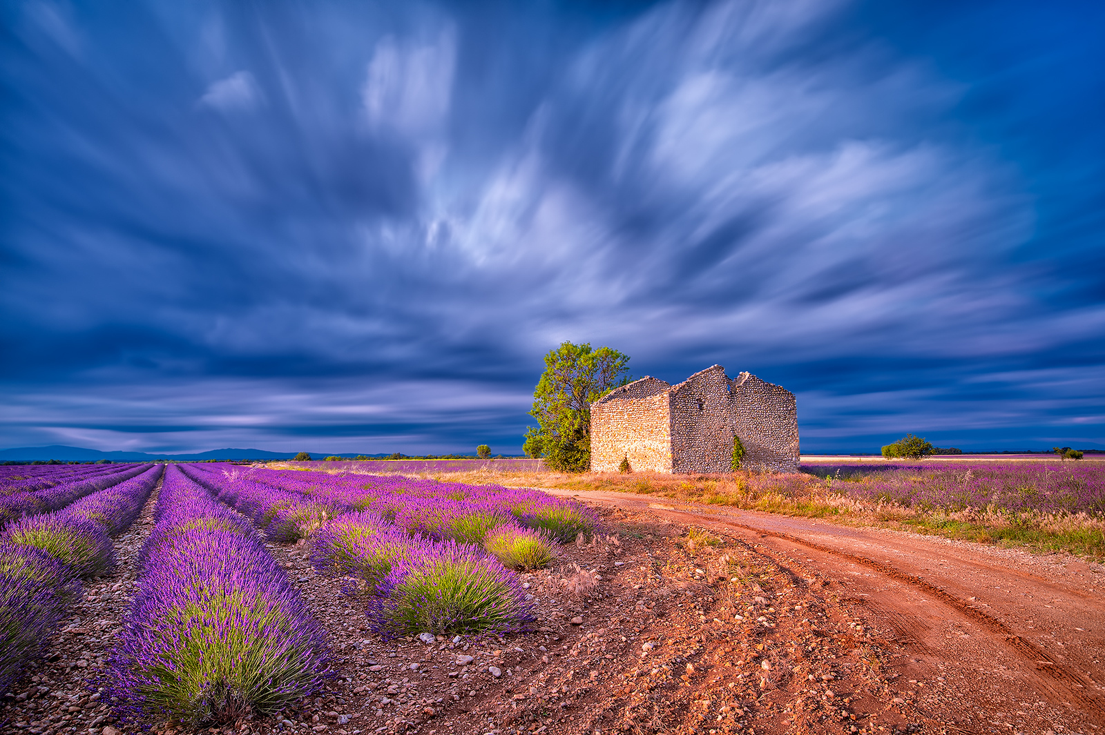 Lavender fields in the Valensole Plain