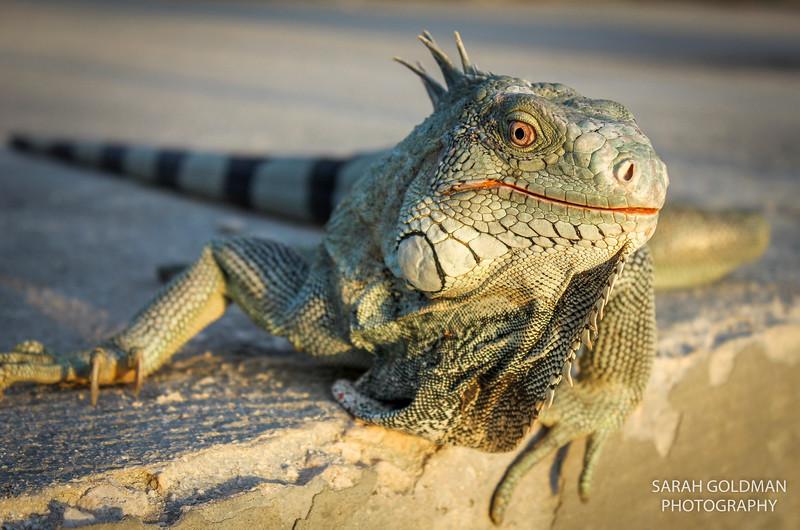 Bonaire-photography (8).jpg