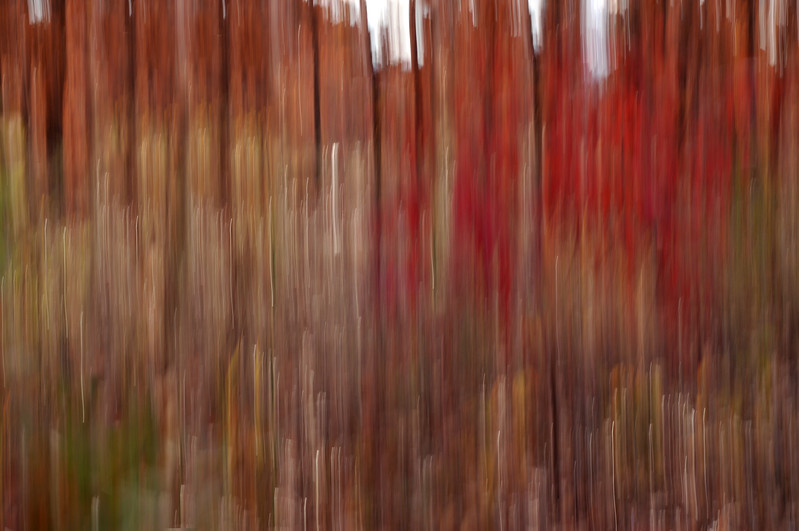 autumn abstract.jpg