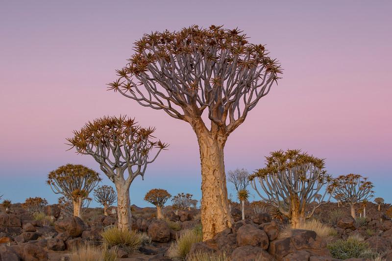Namibia 69A3653.jpg