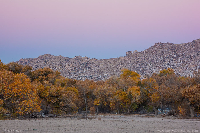 Mojave River Narrows in Autumn