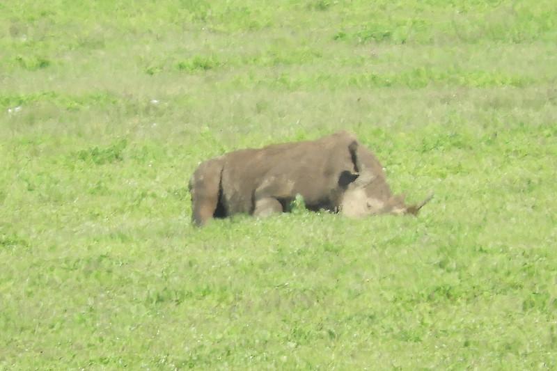 Black Rhino DSCN0514.jpg