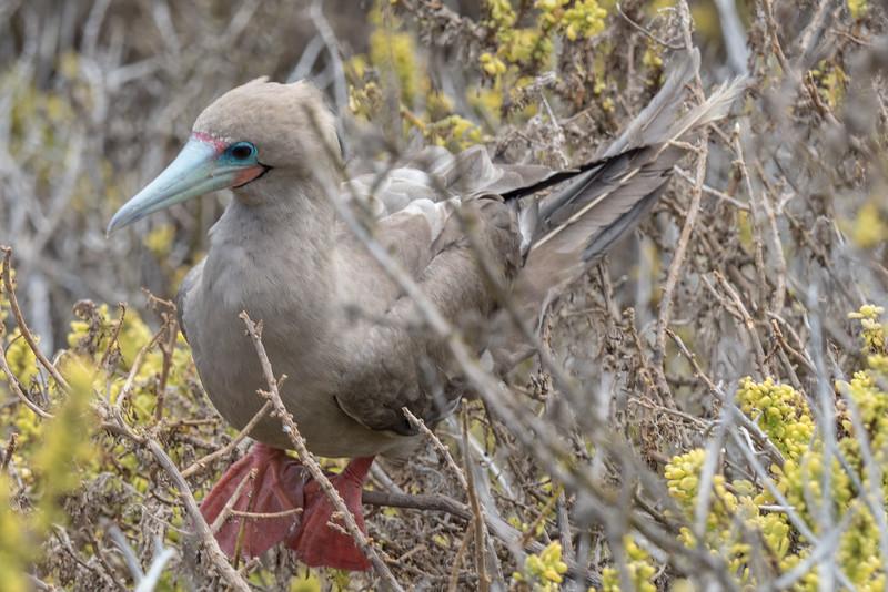 Galapagos-Best-181.jpg