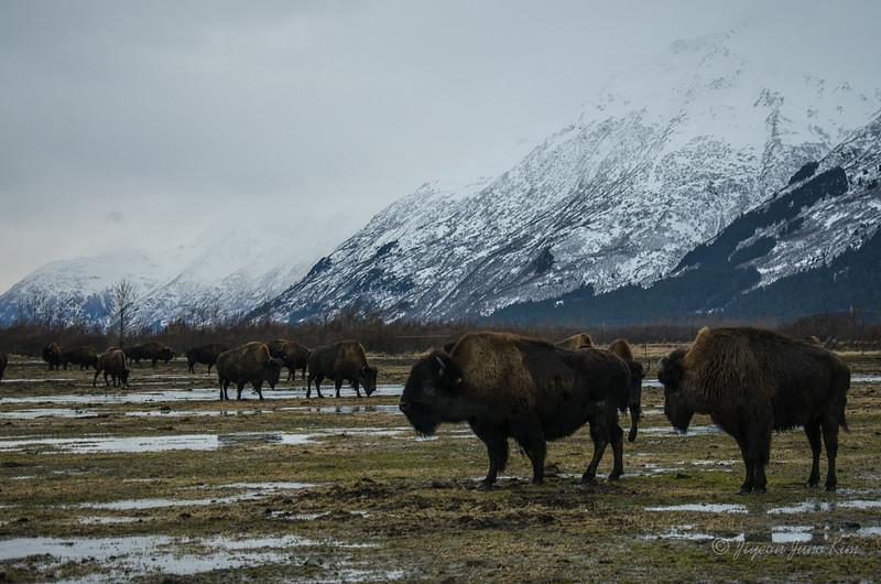 USA-Alaska-Alyeska-0381.jpg