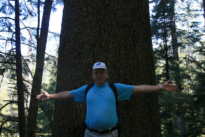 Peder showing the size of the grandmother tree.