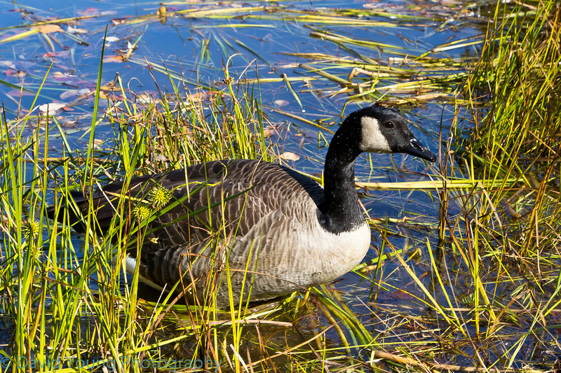 meadowlark 10-17-10-26.jpg