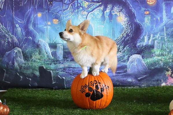Halloween Photo Op
