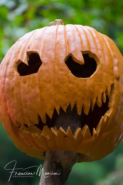 Halloween (1 of 1)-3.jpg