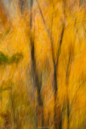Nature Abstracts