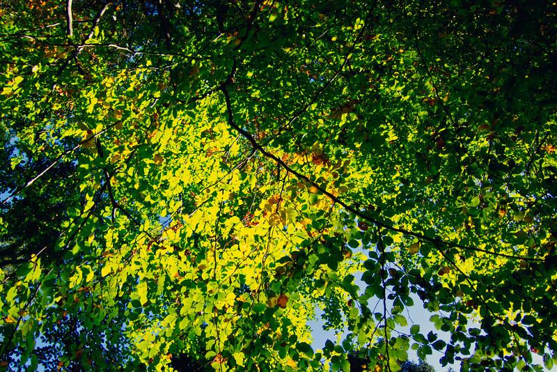 erste Anzeichen für den Herbst tun sich auf...