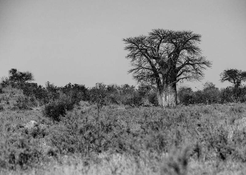 Botswana_June_2017 (5243 of 6179).jpg