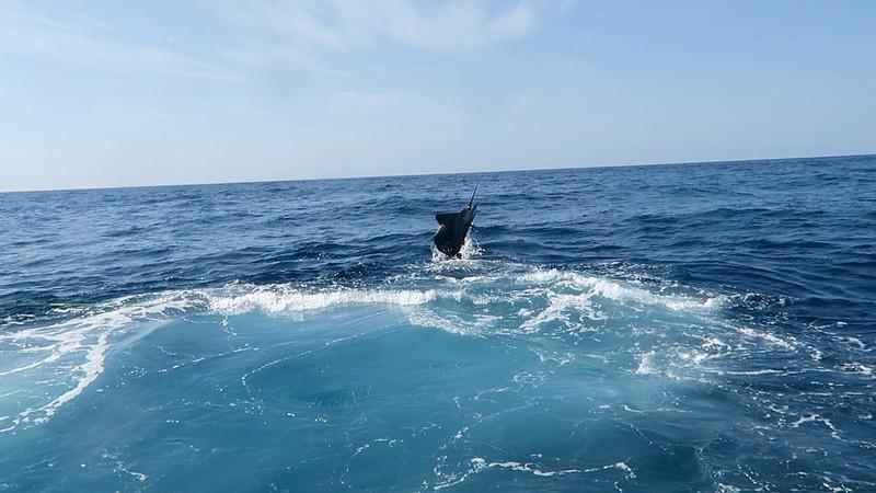 scottSailfish3.jpg