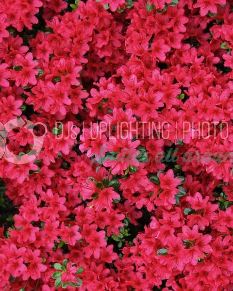 Red Flowers_batch_batch.jpg