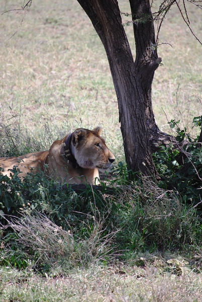 Serengeti (170).JPG
