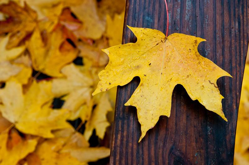 Fall Leaves'10-053.jpg