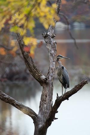 Shore Birds, Wading Birds, Gulls